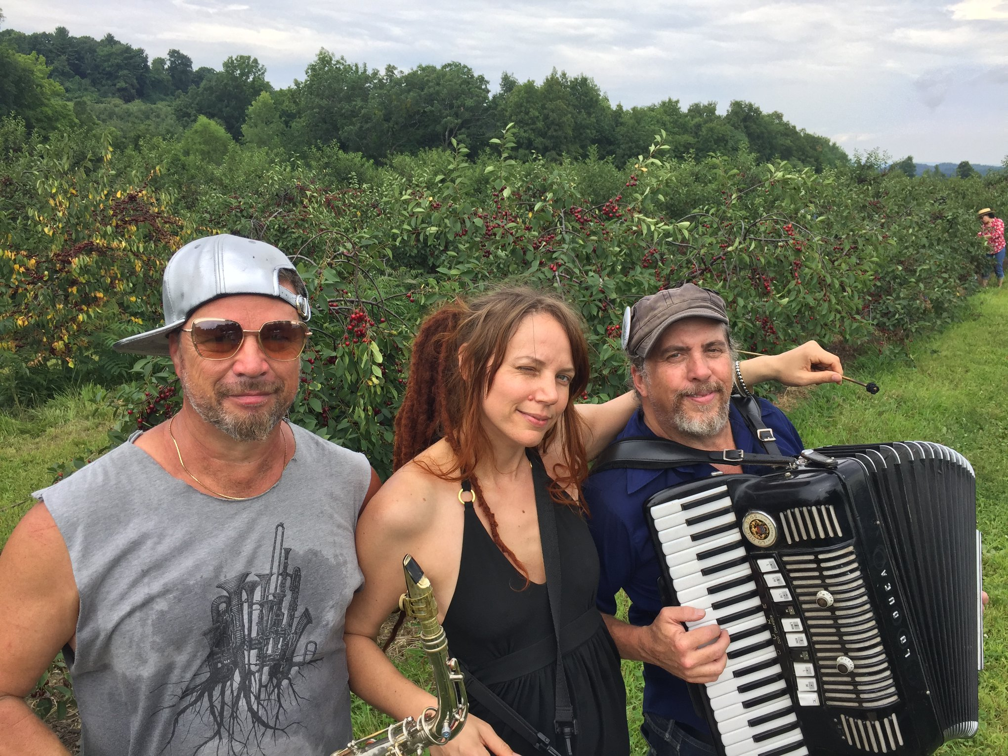 Fix bros fruit farm, hudson ny, band at black sour cherries