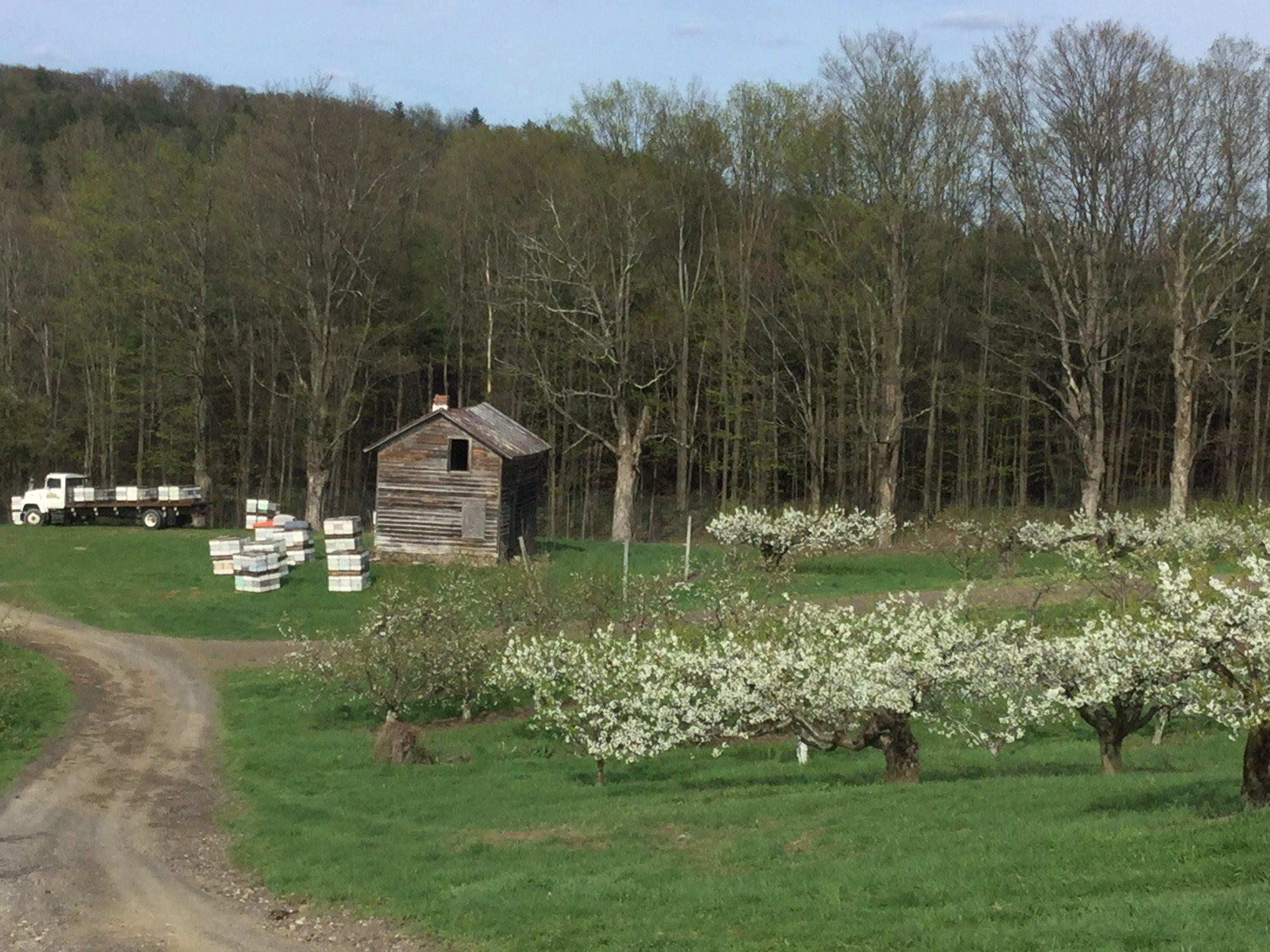 Fix bros fruit farm, hudson ny, bee pollination