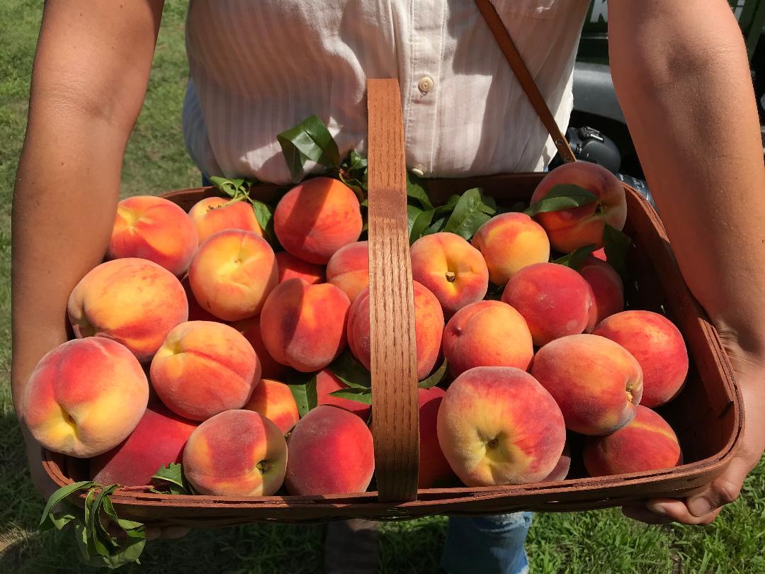 Fix bros fruit farm, hudson ny, peaches